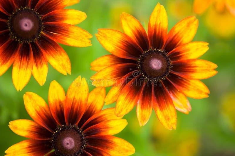 Flor amarilla en campo fotografía de archivo libre de regalías