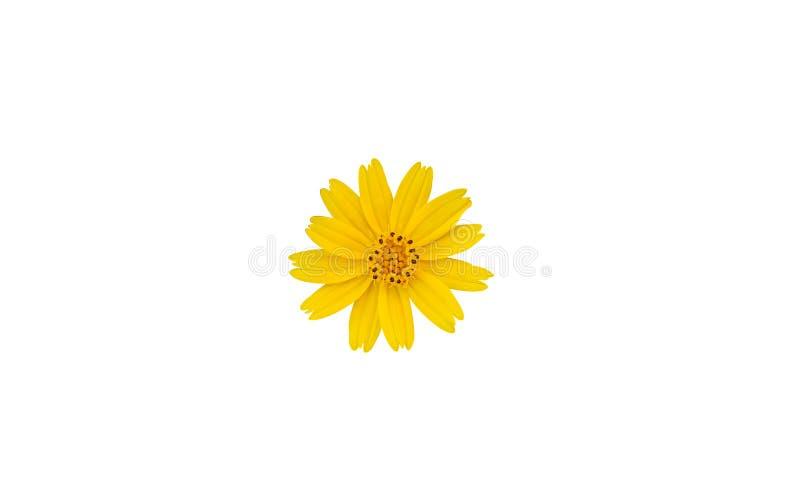 Flor amarilla en el fondo blanco imagenes de archivo