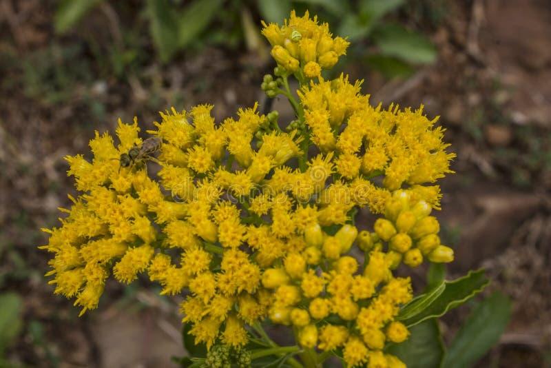 Flor amarilla en el jard?n imagen de archivo