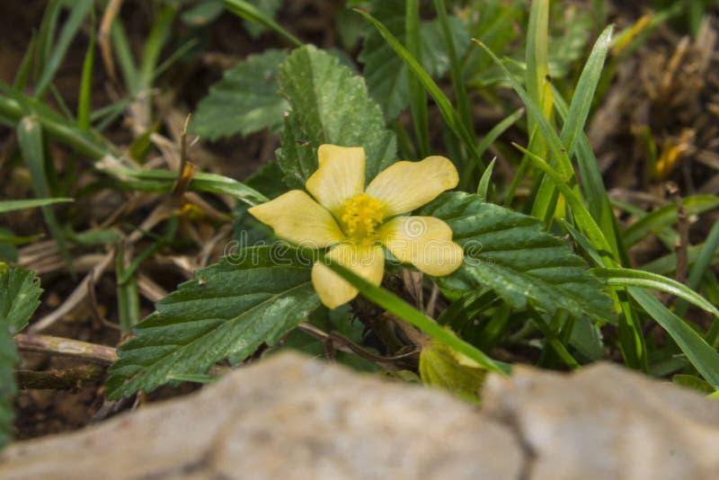 Flor amarilla en el jard?n fotos de archivo