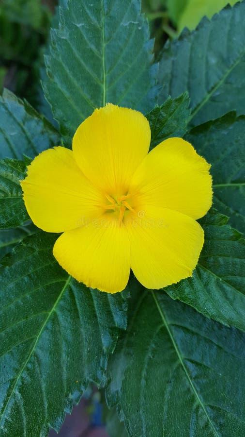 Flor amarilla en fondo verde fotos de archivo