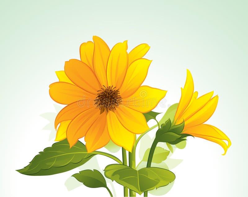 Flor amarilla en la floración libre illustration