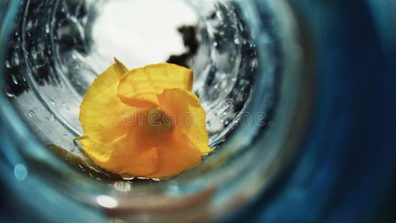 Flor amarilla en una botella fotos de archivo