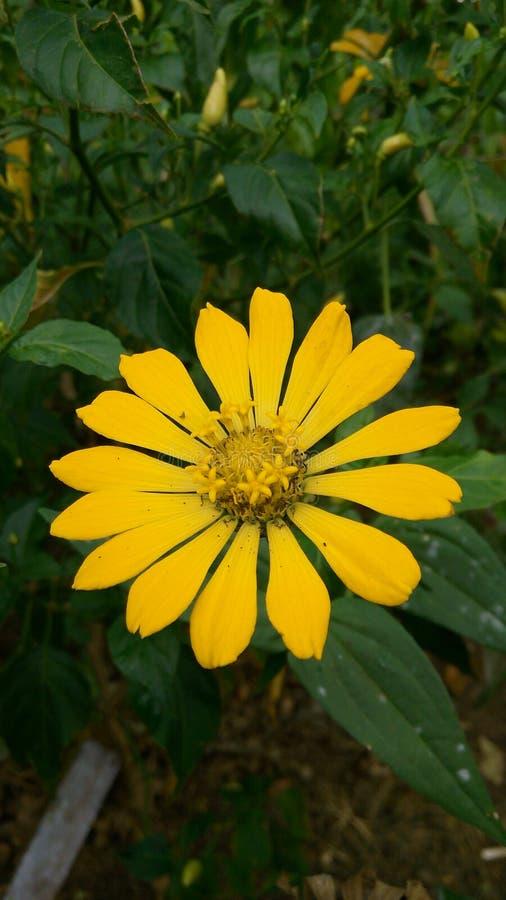 Flor amarilla feliz foto de archivo