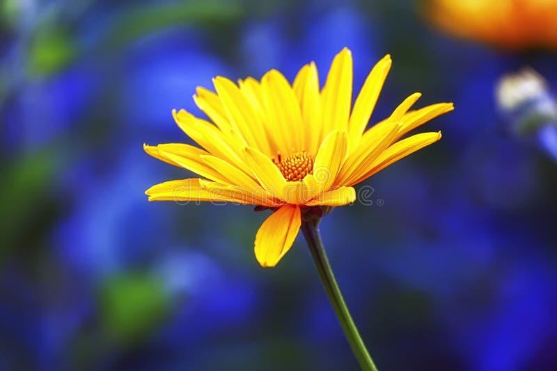 Flor amarilla grande foto de archivo