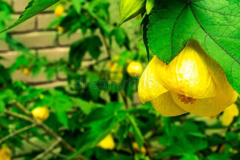 Flor amarilla hermosa el d?a soleado fotos de archivo