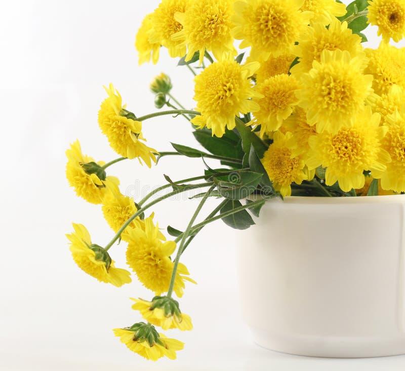 Flor amarilla hermosa en un fondo blanco fotos de archivo libres de regalías