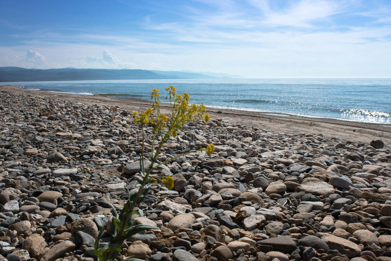 Flor amarilla sola en la orilla del lago fotografía de archivo