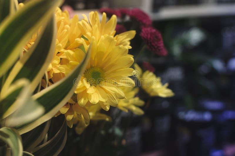 Flor amarilla y violeta 1 foto de archivo
