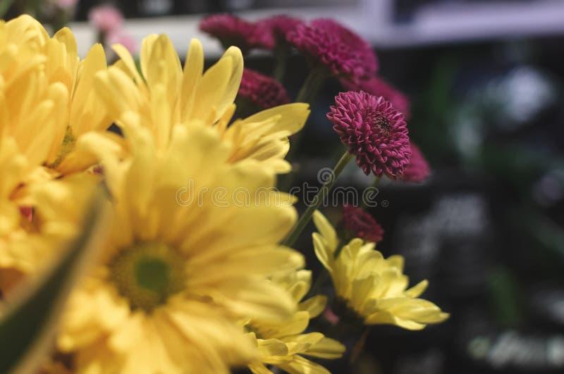 Flor amarilla y violeta 2 foto de archivo