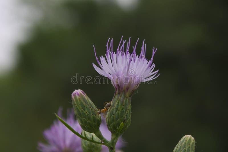 Flor anónima imagenes de archivo