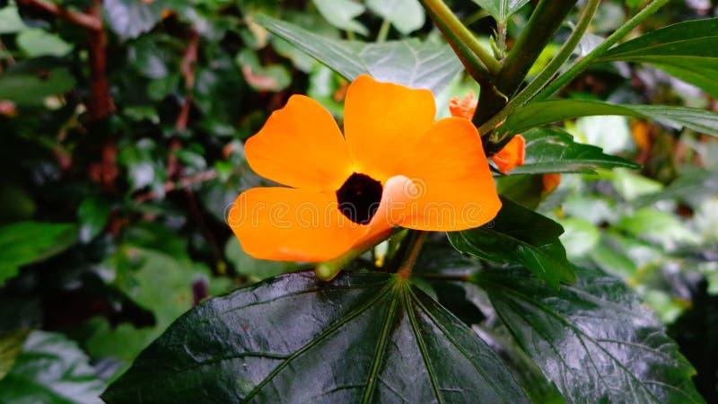 Flor anaranjada imagen de archivo libre de regalías