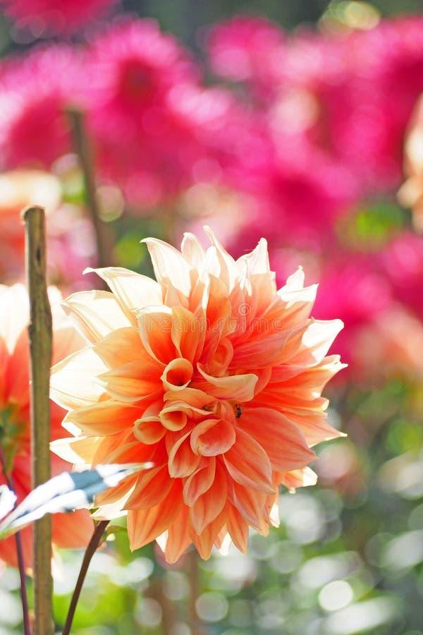 Flor anaranjada con el fondo verde del árbol fotografía de archivo libre de regalías