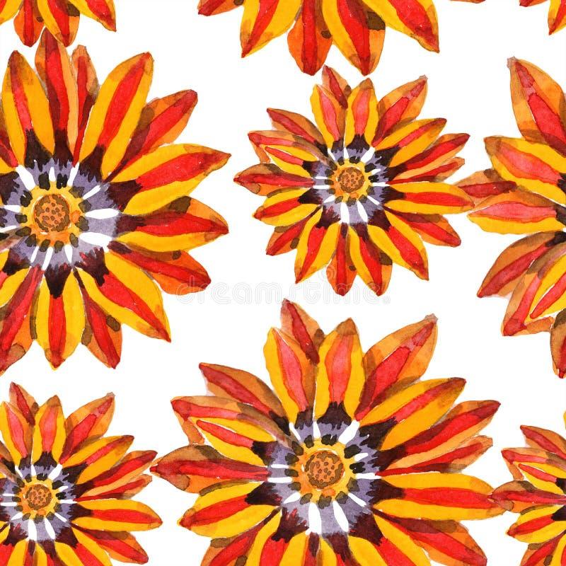 Flor anaranjada del gazania Modelo inconsútil del fondo de la acuarela Textura de la impresión del papel pintado de la tela imagen de archivo