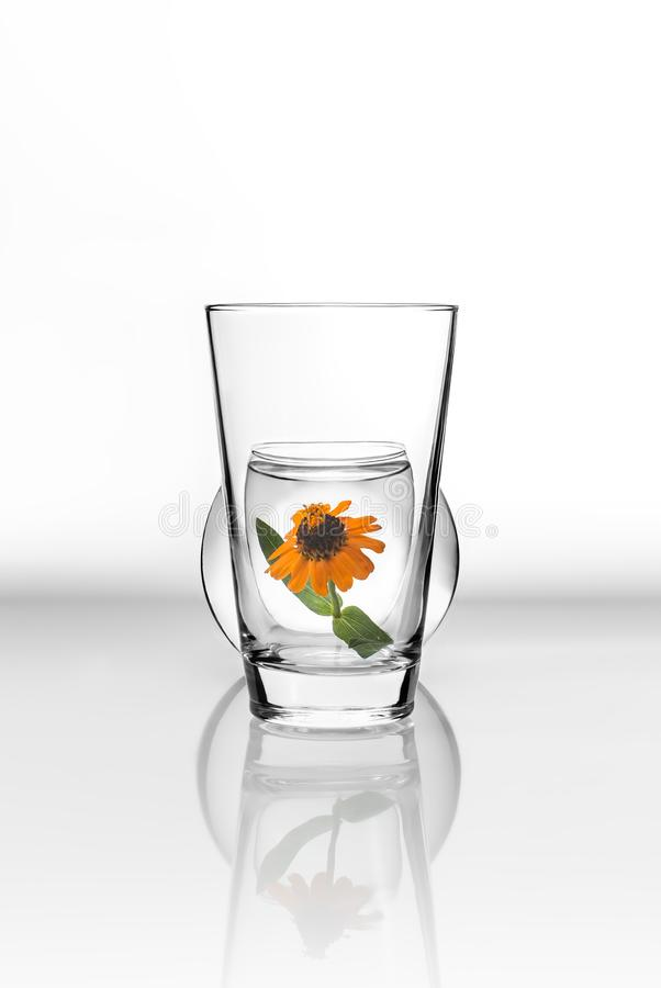 Flor anaranjada dentro de un vaso de agua en un fondo blanco con reflexiones en la superficie fotografía de archivo