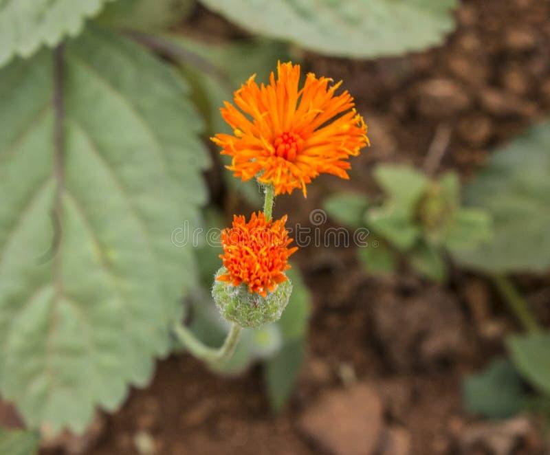 Flor anaranjada en el jard?n fotos de archivo libres de regalías