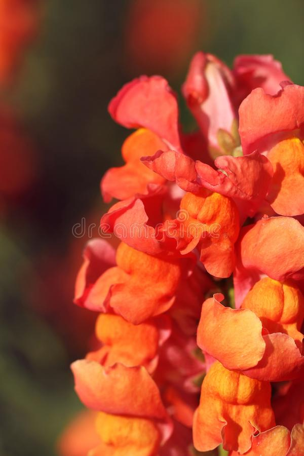Flor anaranjada en el jard?n imagen de archivo