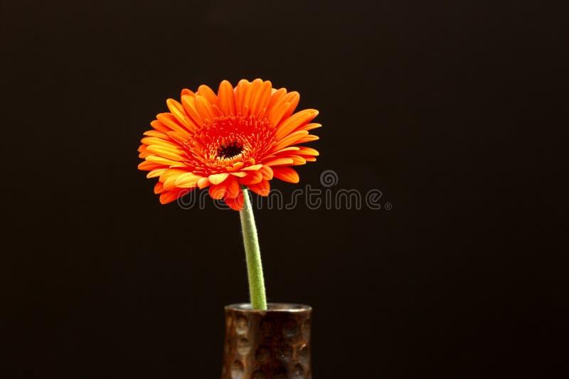 Flor anaranjada en fondo negro foto de archivo libre de regalías