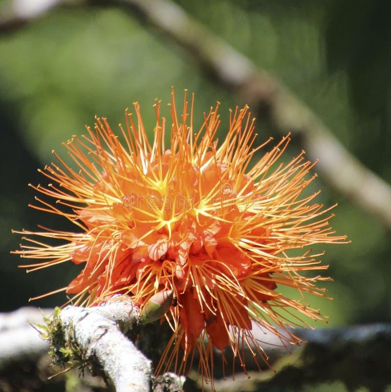 Flor anaranjada y amarilla fotos de archivo