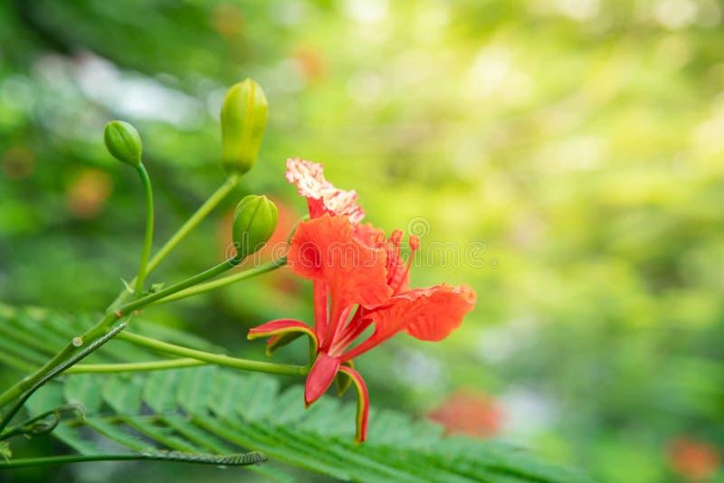 Flor anaranjada y hoja verde con el rimlight amarillo imágenes de archivo libres de regalías