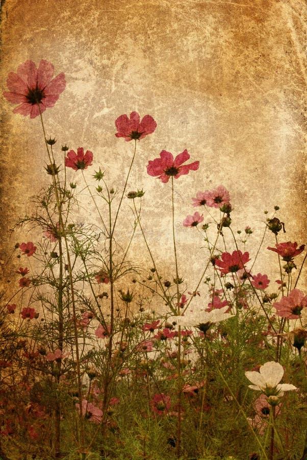 Flor antiquado imagem de stock