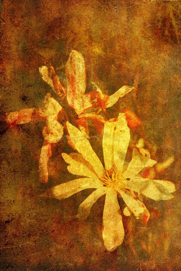 Flor antiquado fotos de stock royalty free