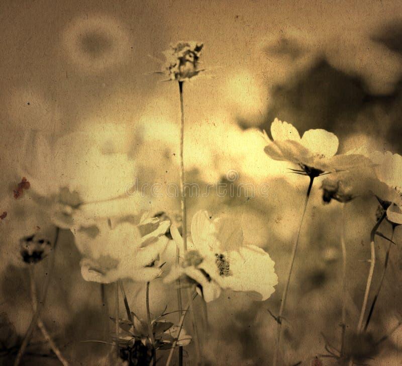 Flor antiquado fotos de stock