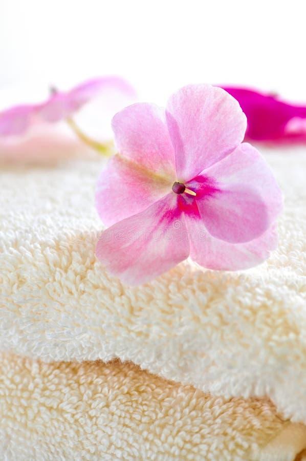 Flor apacible en la toalla de lujo imagen de archivo
