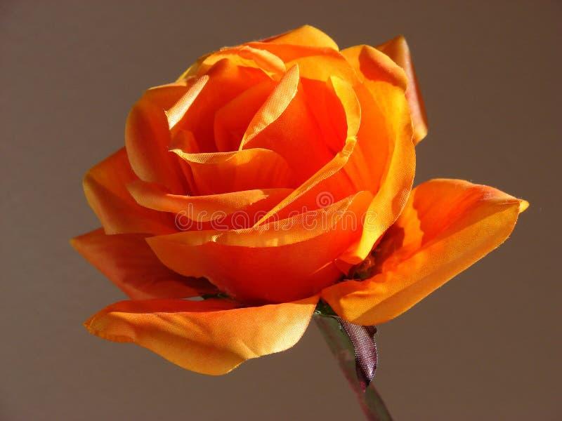Download Flor asoleada foto de archivo. Imagen de solamente, rayo - 1287828