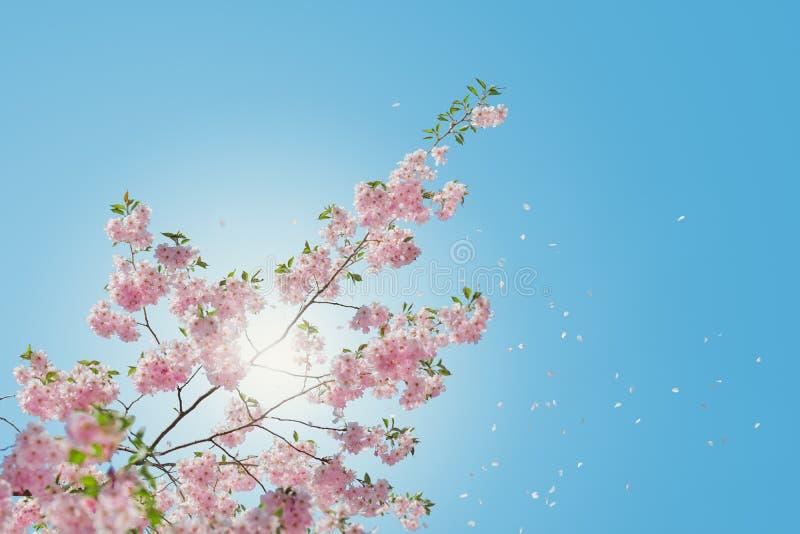 Flor asombrosa imagenes de archivo