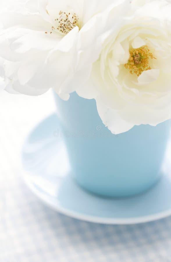 A flor aumentou em uma luz - vaso azul fotos de stock royalty free