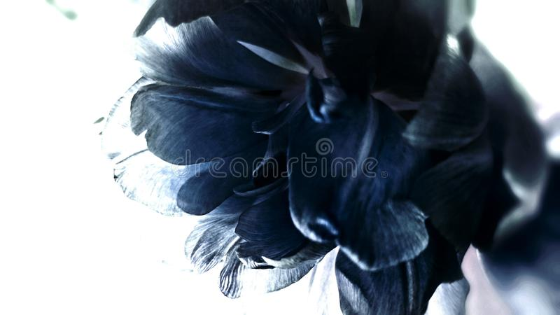 Flor azul imagenes de archivo