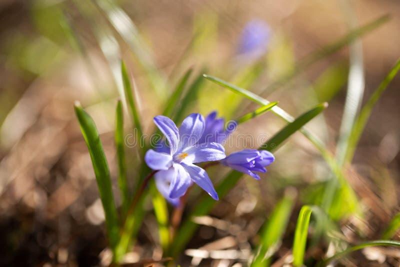 Flor azul al sol imágenes de archivo libres de regalías