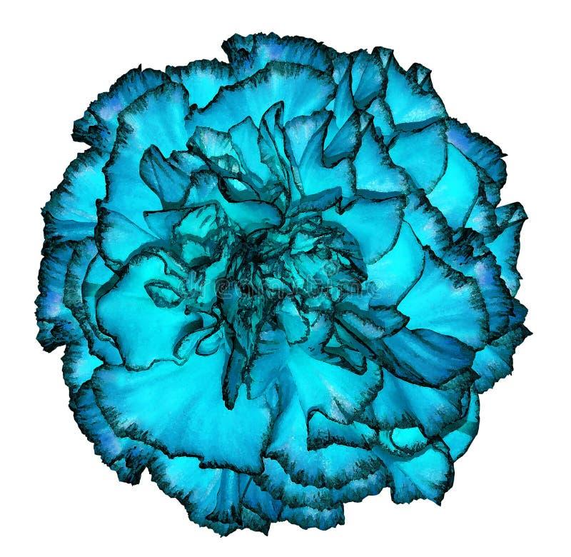 Flor azul brilhante de um cravo no estilo da aquarela isolado no fundo branco Floresça para o projeto, textura, fundo, quadro, fotos de stock royalty free