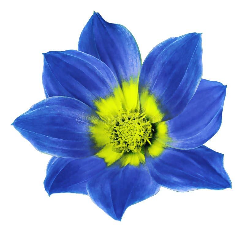 A flor azul brilhante de uma dália em um branco isolou o fundo com trajeto de grampeamento Floresça para o projeto, textura, cart foto de stock