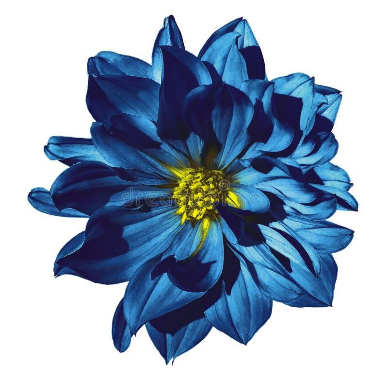 Flor azul da dália em um fundo branco isolado com trajeto de grampeamento closeup Nenhumas sombras imagens de stock royalty free