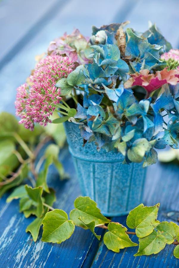 Flor azul de la hortensia con las flores del sedum foto de archivo