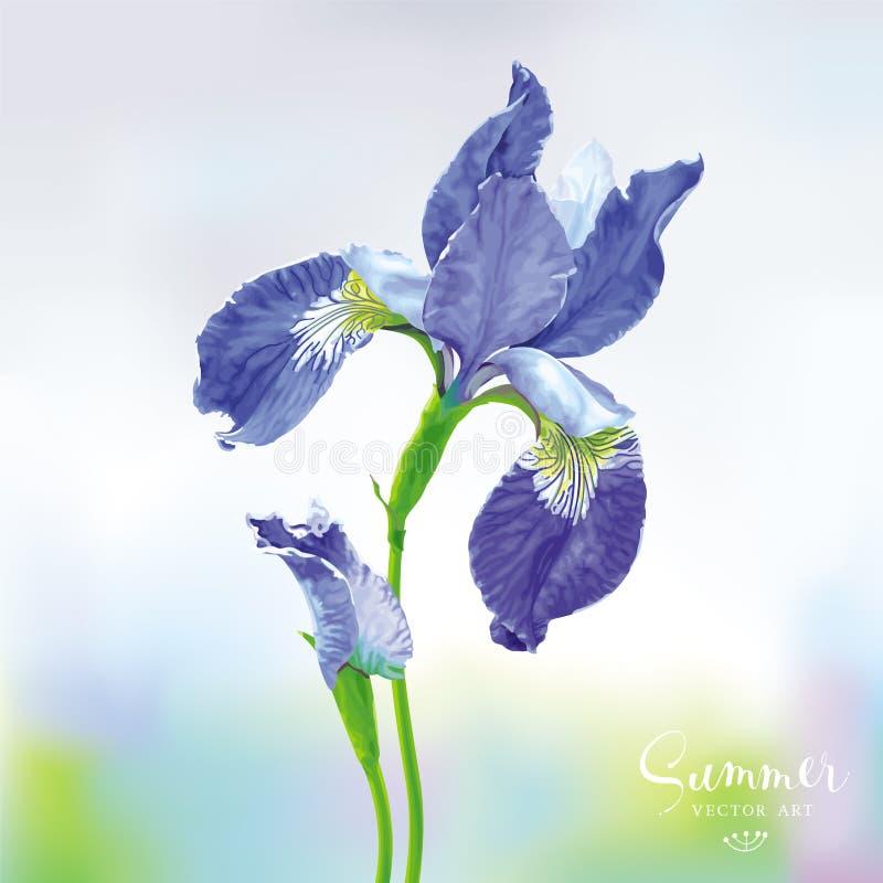 Flor azul del vector del iris stock de ilustración