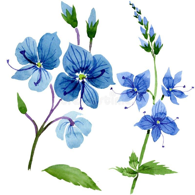 Flor azul del Veronica de la acuarela Flor botánica floral Elemento aislado del ejemplo stock de ilustración