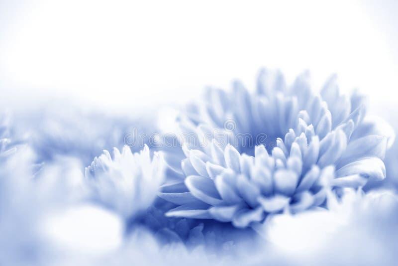 Flor azul doce macia para o fundo sonhador romântico do amor, fre foto de stock royalty free