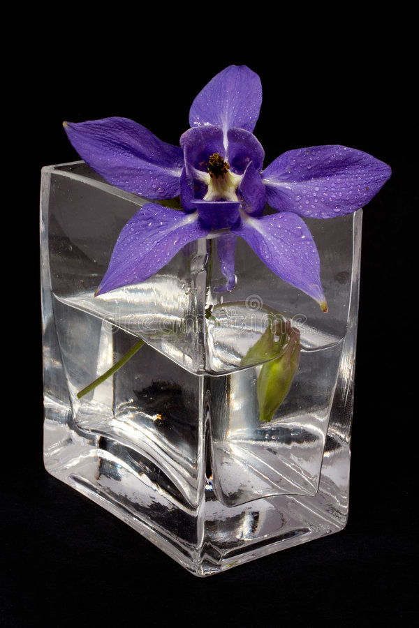 Flor azul en el florero fotografía de archivo