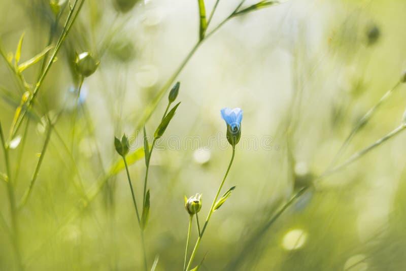 flor azul en un jardín del verano imágenes de archivo libres de regalías