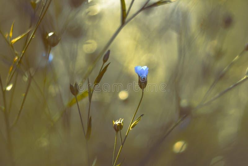 Flor azul en un jardín mágico fotografía de archivo libre de regalías