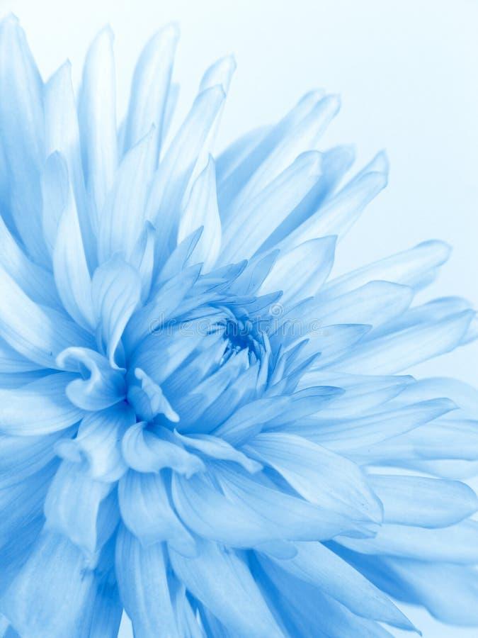 Flor azul macia fotografia de stock royalty free