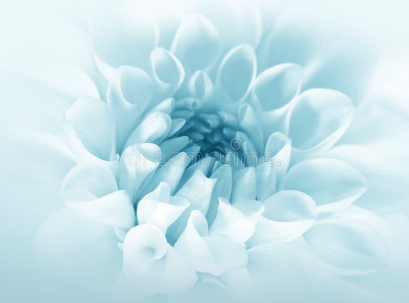 Flor azul macia fotografia de stock