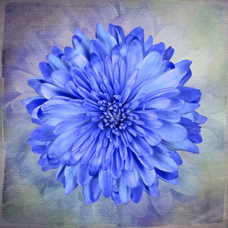 Flor azul macro no papel de parede do vintage da arte ilustração royalty free