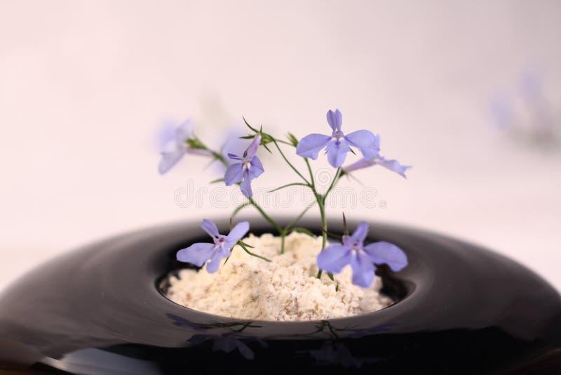 Flor azul pequena fotografia de stock royalty free