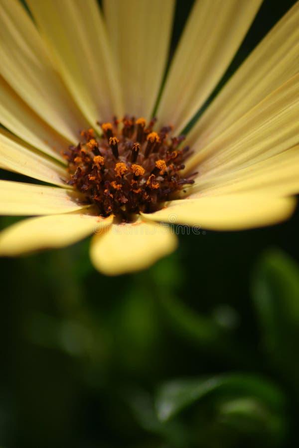 Flor bastante amarilla