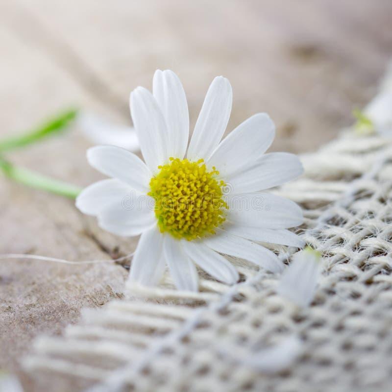 Download Flor blanca imagen de archivo. Imagen de medicina, blanco - 41904329
