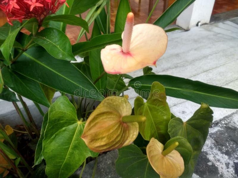 Flor blanca al lado de las plantas verdes y del piso de piedra fotografía de archivo libre de regalías